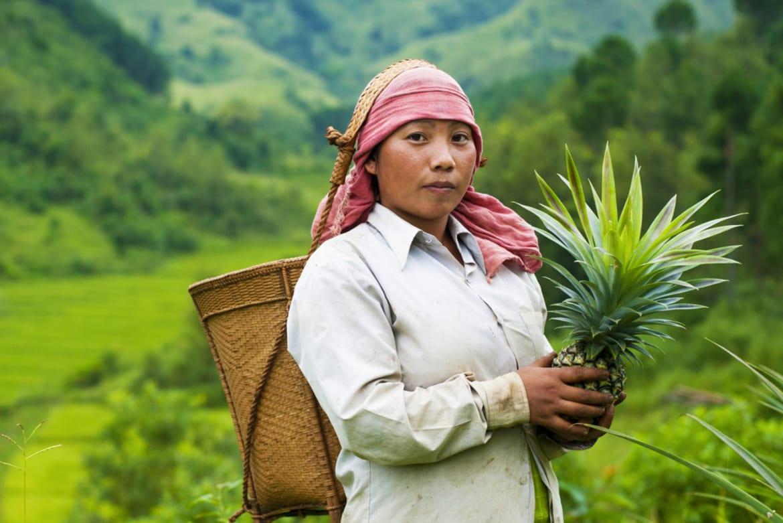 Een leefbaar loon en inkomen voor ananasplukkers