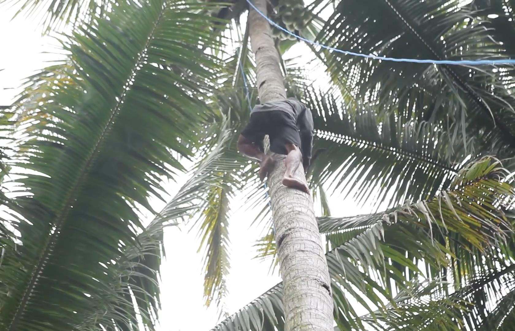 eerlijke kokos met blockchain