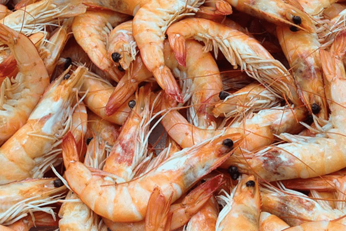 commodities for fair food - living wage and income for shrimp peelers