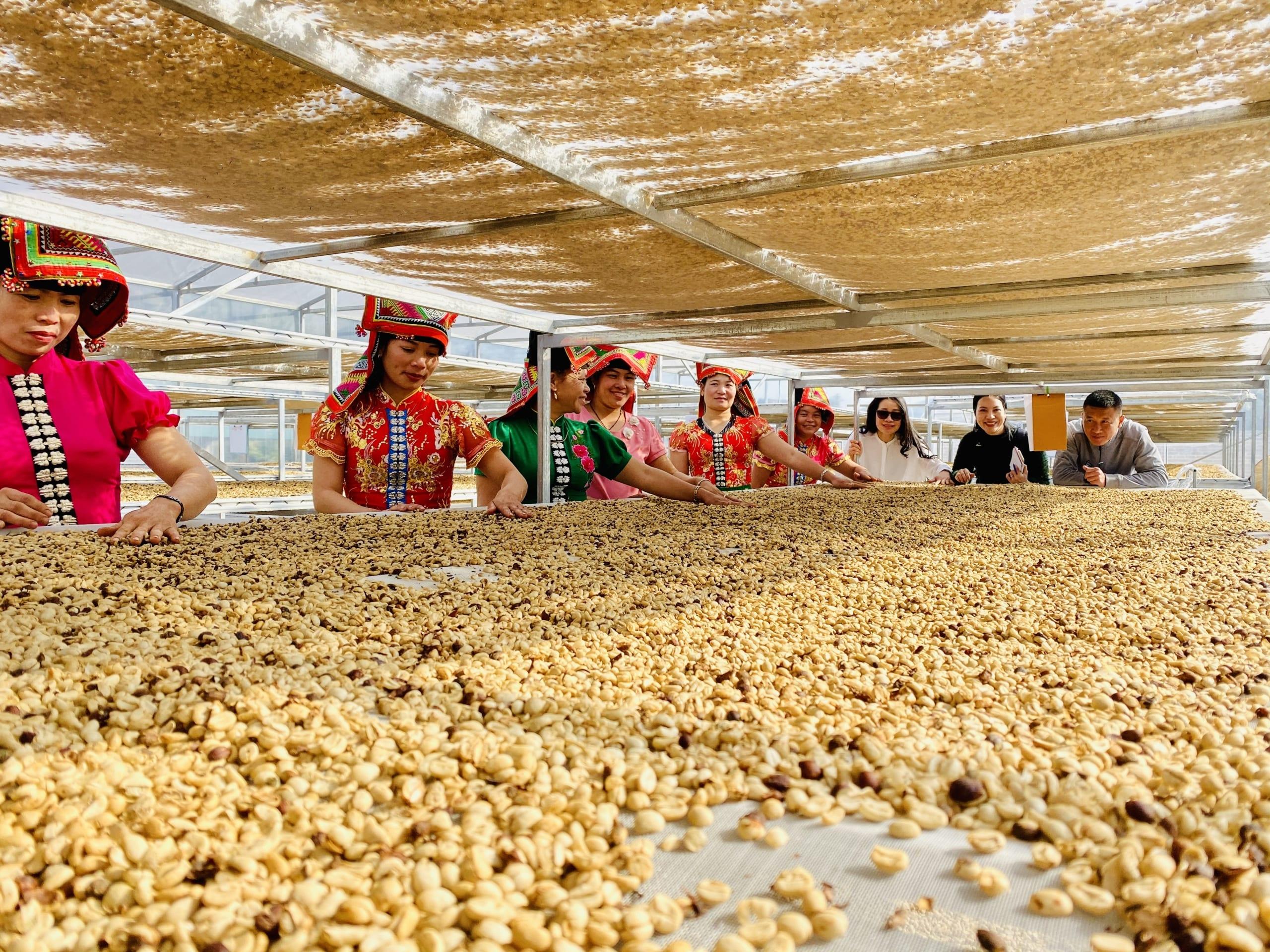 International Women's Coffee Aliance